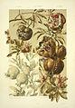 Anton Seder Pomegranates.jpg