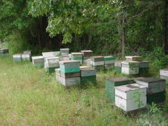 Langstroth hive - Langstroth hives on pallets