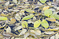 Aquatic plant of Ceyhan River.jpg