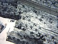Arbuscular mycorrhiza microscope.jpg