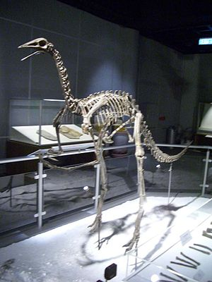 Archaeornithomimus - Archaeornithomimus skeleton model displayed in Hong Kong Science Museum