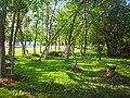 Area verde en el Boulevard Bahía, Chetumal. - panoramio.jpg