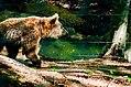 Arktos Nymphaion Vitsi.jpg