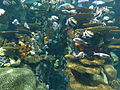 Artificial coral reef Ripley's Aquarium, Myrtle Beach 4.JPG