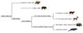 Artiodactyla phylogeny (ita).png