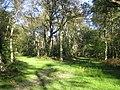 Ashridge Park, Sallow Copse - geograph.org.uk - 593910.jpg