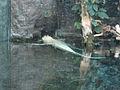 Audubon Aquarium (5345159316).jpg