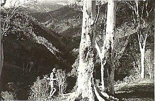 Comando australiano em Timor 1942.jpg