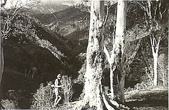 Battle of Timor - An Australian commando, possibly Sergeant Bill Tomasetti of the 2/2nd Independent Company, in typical mountain terrain on Timor, on 12 December 1942. (Photograph by Damien Parer.)