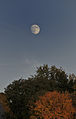 Autumn Moon (2982446021).jpg