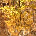 Autumn Reflections - Flickr - treegrow (2).jpg