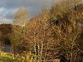 Autumn trees by the Teign - geograph.org.uk - 1052049.jpg