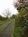 Autumnal country lane leading south from Hall Road in Hoe - geograph.org.uk - 607324.jpg