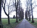 Avenue at the Royal Agricultural College - geograph.org.uk - 353367.jpg