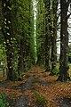 Avenue of trees, Eastnor - geograph.org.uk - 1023948.jpg