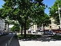 Bäume am Marstall in Hannover.jpg