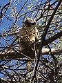 Baby Owl.jpg