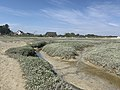 Baie Somme Hourdel - Cayeux-sur-Mer (FR80) - 2021-05-29 - 67.jpg