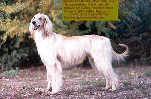 Bakhmull - Image: Bakhmull rad o bark