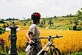 Bali ebike cycling jatiluwih UNESCO fahrrad bersepda fietsen harvest time.jpg