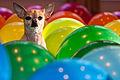 Balloons huey.jpg