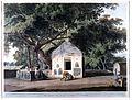 Banyan tree with Hindu shrine at Gaya, Bihar Wellcome L0022028.jpg