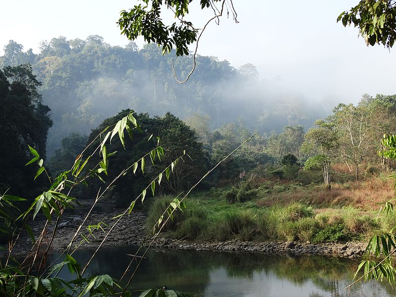 File:Barail Wildlife Sanctuary, Assam.jpg