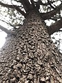 Bark of a different path.jpg
