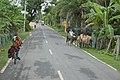 Basanti Highway - SH 3 - Kalidanga - South 24 Parganas 2016-07-10 4719.JPG