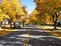 Beckwith Avenue in fall - University Area Historic District, Missoula, Montana.jpg