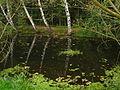 Bedřichovka - rybníček při kapli (2).JPG