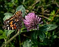 Bee, Butterfly and Fower, Hartley Park, Duluth 9 24 17 (36626416153).jpg