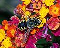 Bee September 2007-13.jpg