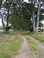 Beech Avenue - geograph.org.uk - 957254.jpg