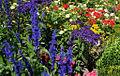 Benrath englischer Garten.jpg