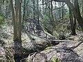 Benthall Woods - geograph.org.uk - 161836.jpg