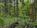 Białowieża National Park, Poland (4664010761).jpg