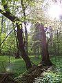 Białowieski Park Narodowy 04.jpg