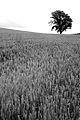 Biei landscape (7662408068).jpg