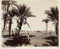 """Bild från familjen von Hallwyls resa genom Algeriet och Tunisien, 1889-1890. """"Biskra. Dadelskörd."""" - Hallwylska museet - 91944.tif"""