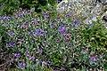 Biljke 0498.jpg