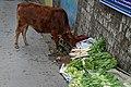 BirG027-Dharamsala.jpg