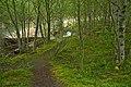 Birch Glade at Coldwater Lake-Gifford Pinchot (24506329174).jpg