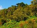 Birches - panoramio (2).jpg