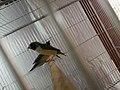 Bird in the case.jpg