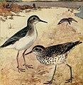 Bird lore (1911) (14754948172).jpg