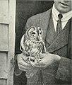 Bird notes (1902) (14749588862).jpg