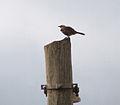 Birdo.jpg