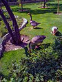 Birds Garden of Isfahan باغ پرندگان اصفهان 03.jpg