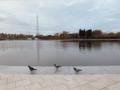 Birds of Baku.png